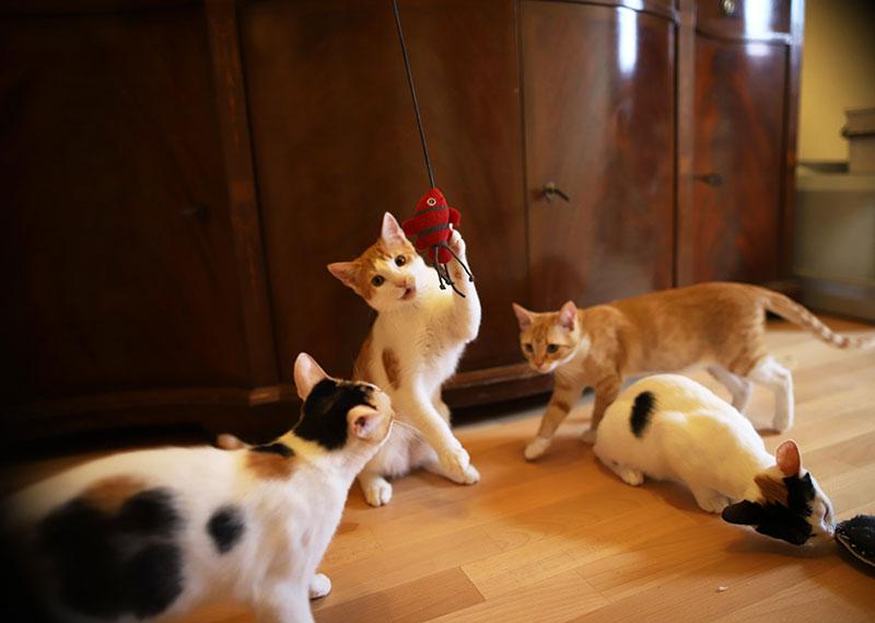 Lernen Sie unsere Katzenkinder kennen