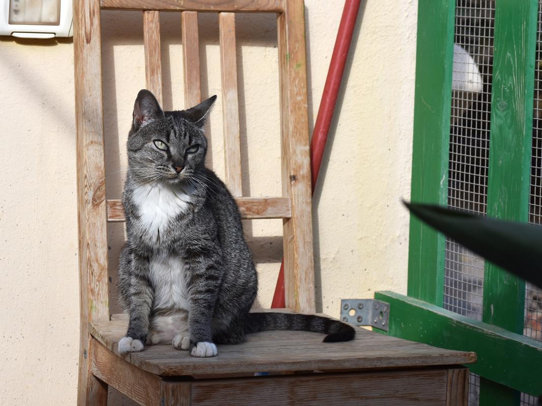 Internationaler Tag der Katze – werden Sie Pate!