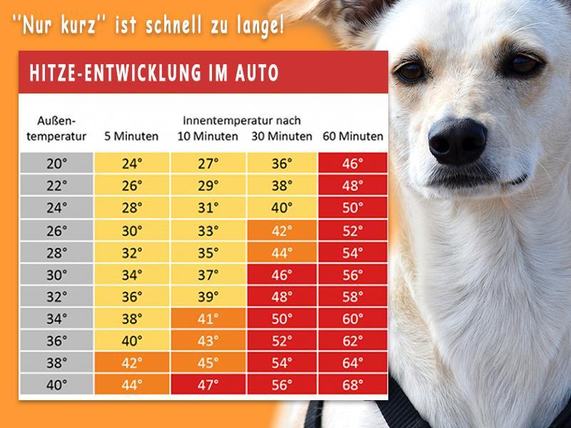 Tödliche Gefahr für Ihren Hund