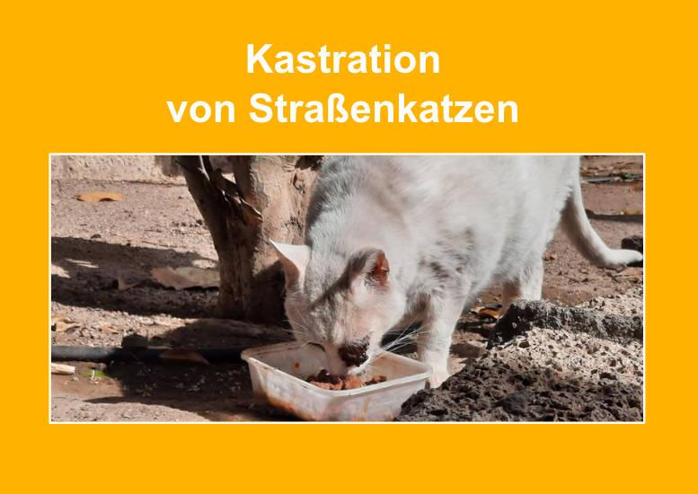 Große Straßenkatzen-Kastrationsaktion